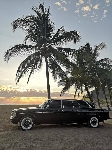 574PALM_TREE_LIMOUSINE_CO.jpg
